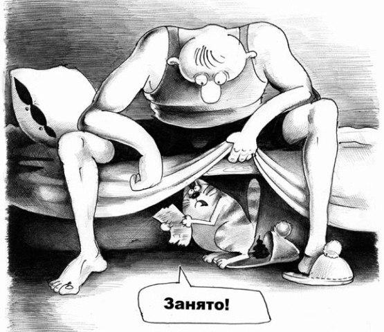 Что делать если кошка гадит на кровать
