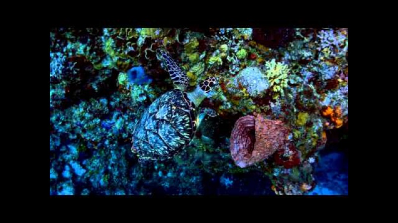 QUINTANA ROO 3 HD STARS OF THE BICENTENNIAL on Vimeo