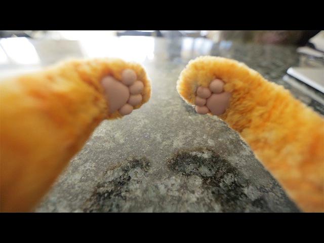 Cat Behavior Finally Explained