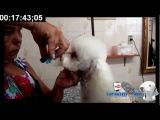 Groom Tv Br - Tosa 7 completa em 18 minutos - Adriana Skolimoski HD #33