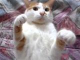 Дрессировка кота на замирание