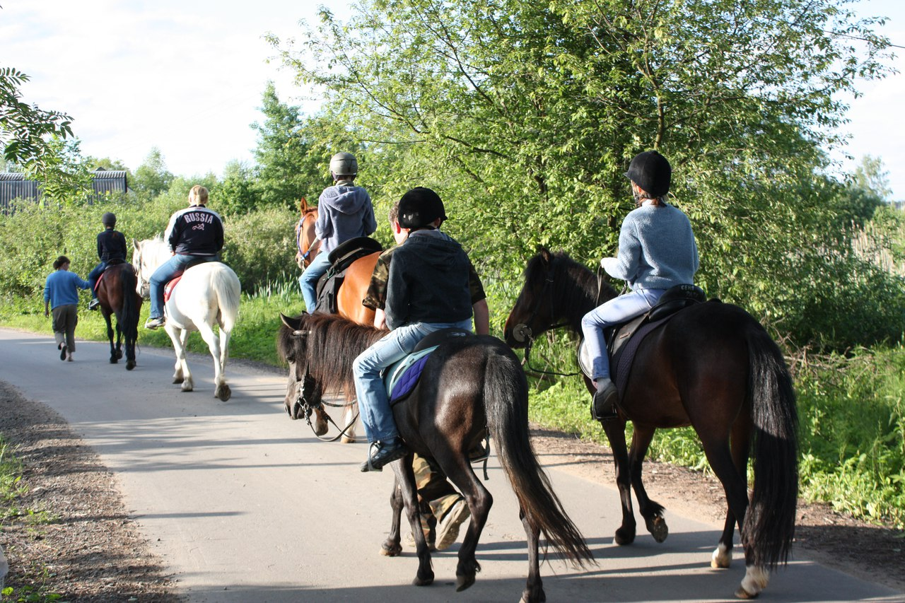 конные прогулки для всей семьи