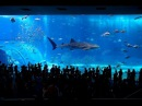 BEGIN Japanology - The Sea Life In Japanese Aquariums アクアリウム
