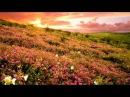 Удивительно красивая музыка - Джеймс Ласт Жизнь прекрасна Музыка