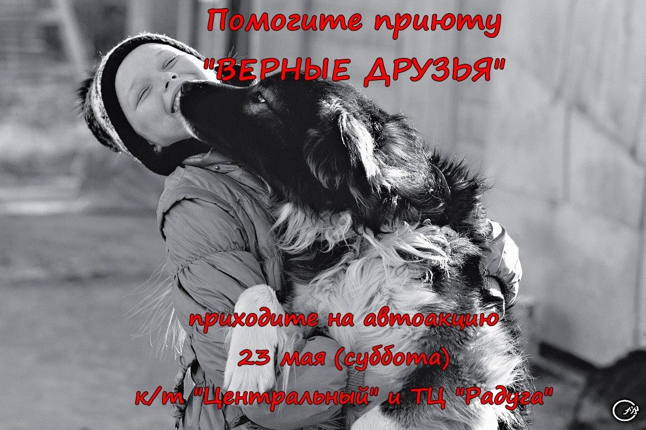 """Афиша Калуга Автоакция приюта """"Верные друзья"""""""