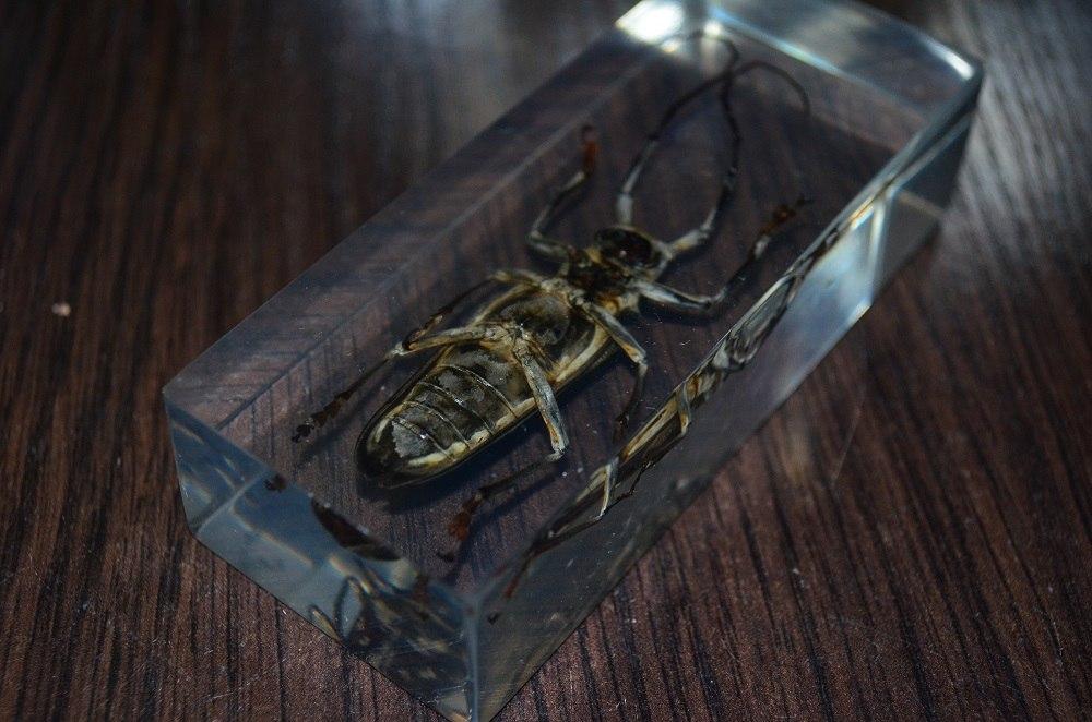 насекомые и их знакомые том 77