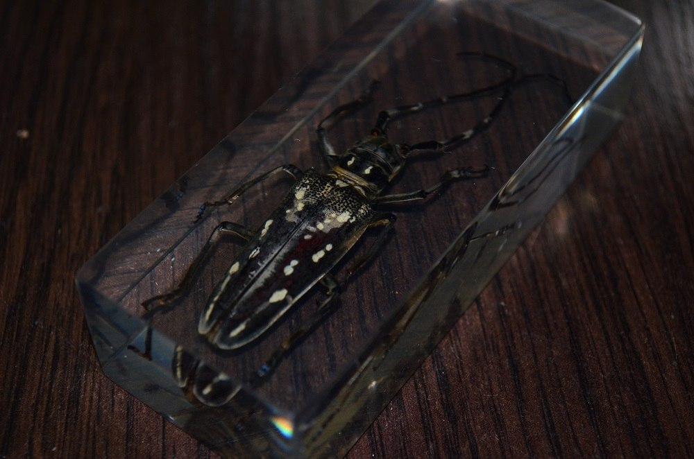 насекомые и из знакомые