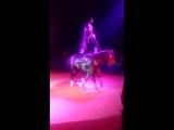 цирк Шапито 11