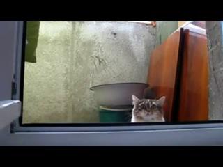 Фильм ужасов про кошек 3