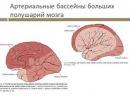 Подозрение на ОНМК неврологический осмотр Буркова К. И.