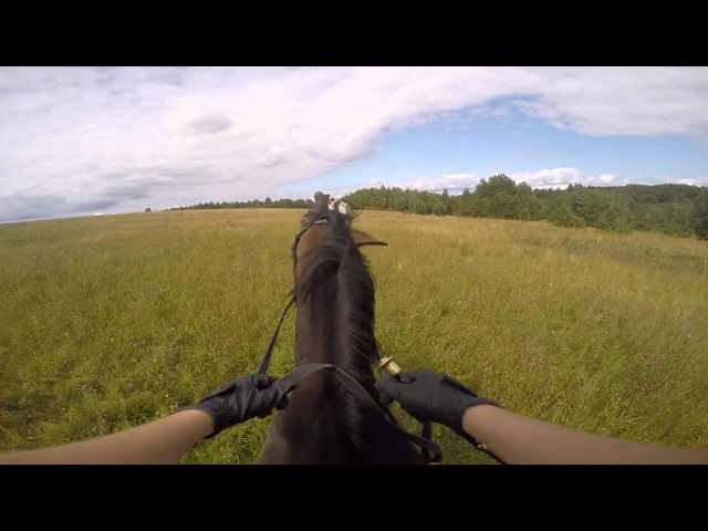 Прогулка в полях на лошади Допо. 06.08.2015