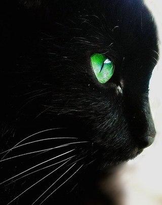 коты воители.остролистая картинки