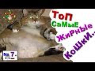 ЖиРнЫй ТОЛСТЫЙ,Кот,КОТЕНОК Кошка,Прикол РжАкА 2015 Смешно до слез,№7