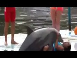 Дельфин занимается сексом с девушкой. Смотреть онлайн - Видео - bigmir)net