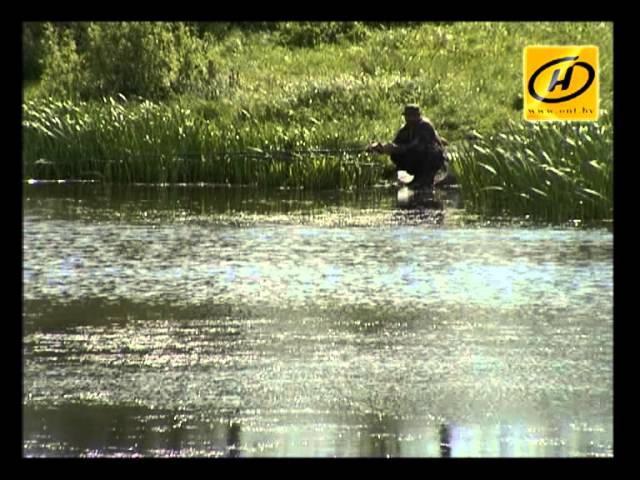 Тарантулы прижились на юге Беларуси