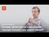 Ткани животных - Евгений Шеваль