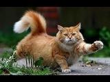 смешные кошки до слёз!!!