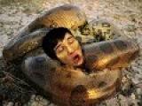Giant Anaconda - Part 27