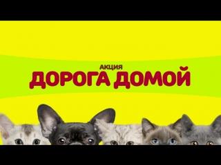 Акция - Сургтинтерновости и Потеряшки 15 августа с 12.00 на Сургутском Арбате