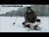 Щука на жерлицу зимой видео 2015