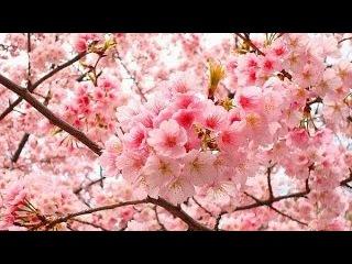 Música Japonesa para Relajación y Meditación reiki Relax ZEN Japan