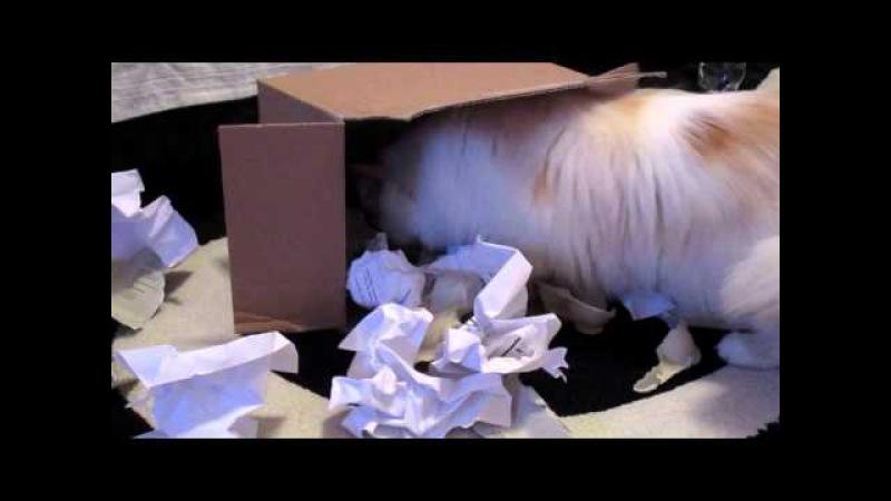 Cat vs box
