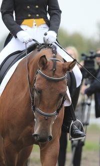 Лошадка, школа верховой езды - Конные клубы