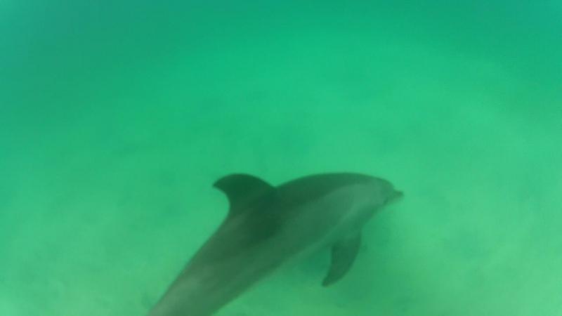 Дельфиний вам, красноморский привет!