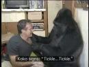 Знаменитая горилла Коко знающая 1000 слов на языке жестов с американским актёром Робином Вильямсом
