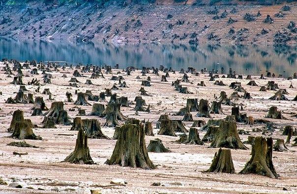 «Когда будет срублено последнее дерево, когда будет отравлена последняя река, когда будет поймана последняя птица, — только тогда вы поймете, что деньги нельзя есть».