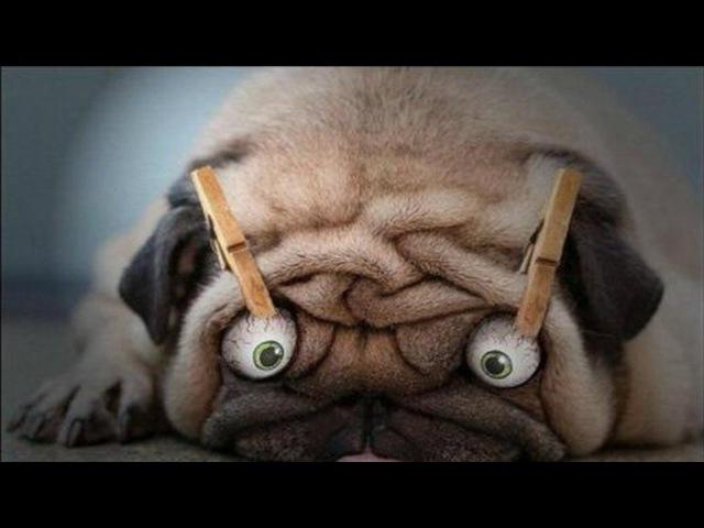 Приколы про животных и людей самые смешные смешно до слез 1