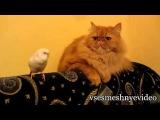 Лучшие смешные ролики про кошек! Свежая подборка