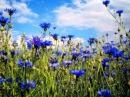 Юрий Антонов - Не рвите цветы