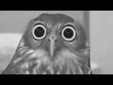Nelly the Owl's PTSD.