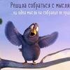 Галка-Галочка Галина
