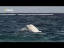 National Geographic Дикая Канада 4 серия из 4 Wild Canada 2014 ДБ HDTVRip