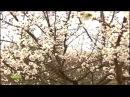 Turkmen klip - Uz Eylar [2015]HD