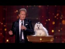 Britain's Got Talent 2015 S09E14 Semi-Finals Marc Métral and Miss Wendy The Singing Dog