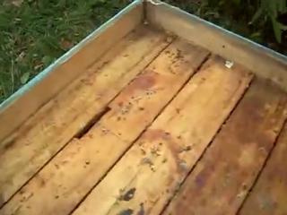 Кормушки для пчел из подручных материалов