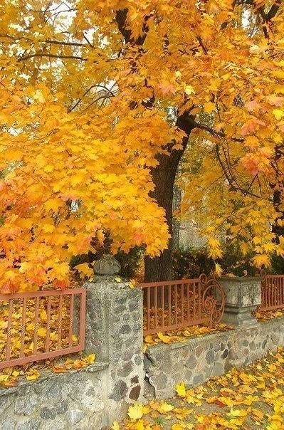 Отцвели цветы, падают листья, птицы молчат, лес пустеет и затихает.ОСЕНЬ. - Страница 6 RuYy107pdC8