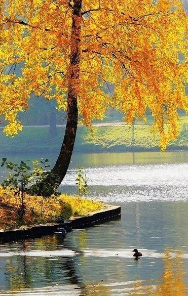 Отцвели цветы, падают листья, птицы молчат, лес пустеет и затихает.ОСЕНЬ. - Страница 6 0GZi9n3tJjA