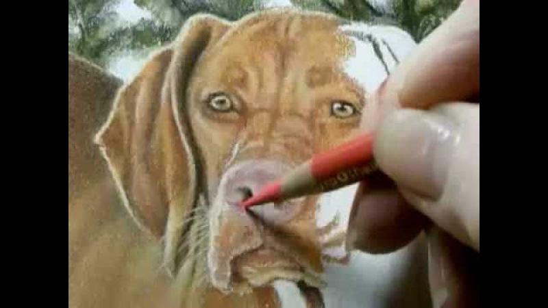 Painting Demonstration - Vizsla Dog by Roberta Roby Baer PSA