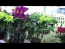 2010台南市蘭藝協會冬季全國蘭花大展Tainan City Orchid Show