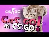 CatsS GO in CS:GO!