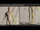 01. Learning Anatomy - Proportions (Anterior)