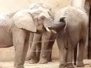 Слон засунул хобот в анал и жрет говно прикол зоопорно зеленый слоник