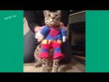 Шутки и приколы с котами