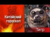 Знак Тигра. Китайский гороскоп. 3 выпуск | Вторник-пятница 12:30 | Телеканал ТВ-3