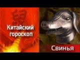 Знак Кабана(Свинья). Китайский гороскоп | Премьера | Телеканал ТВ-3