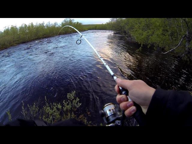 Taimenen, ahvenen ja hauen kalastusta joella Norjassa